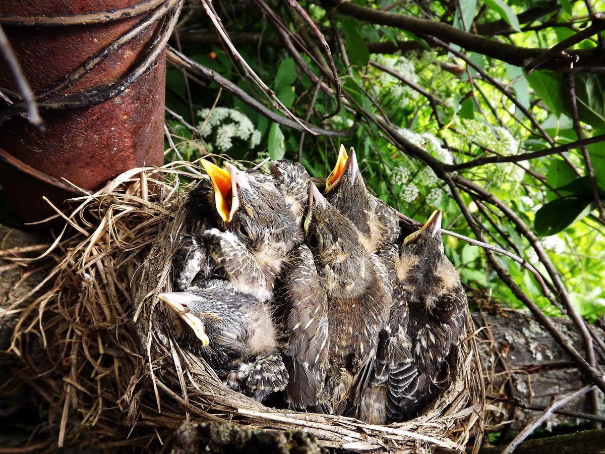 раут птицы их птенцы и гнезда картинки идей здесь