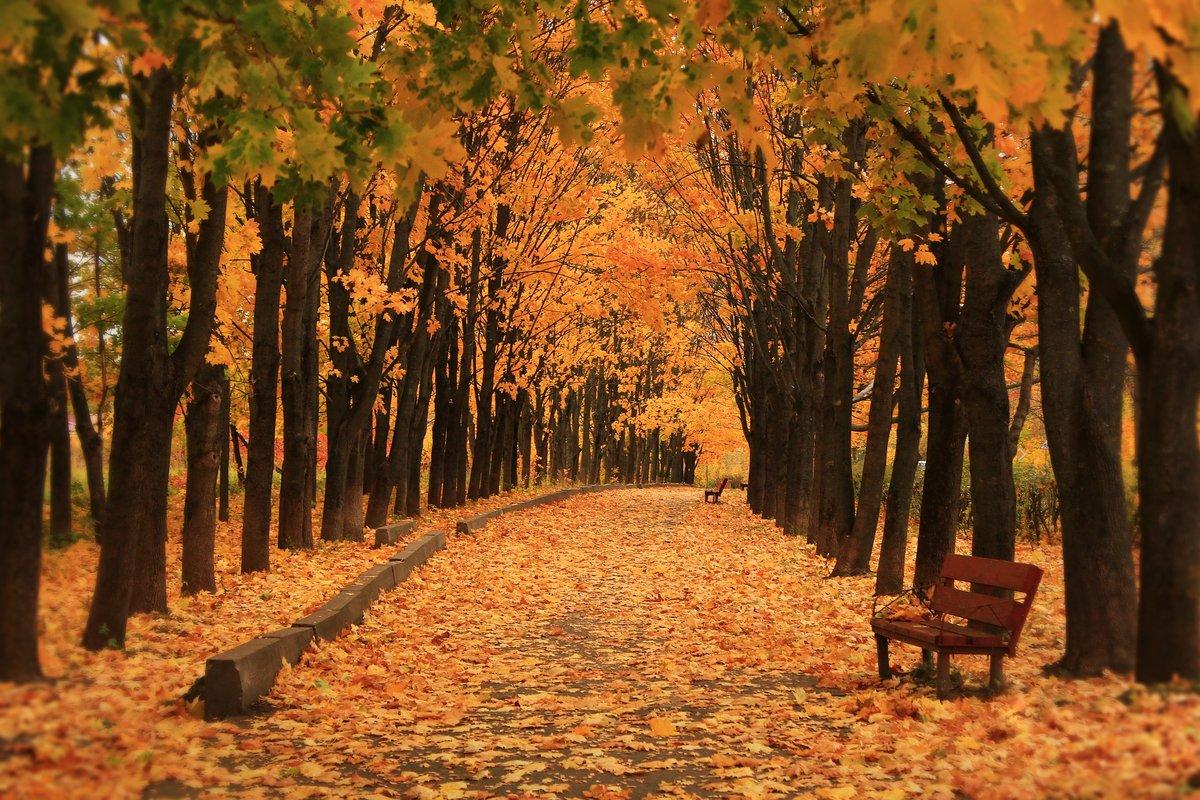 всего, картинки про осень октябрь кассу