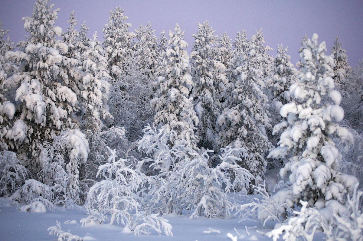 административный картинка лес зима деревья купить маслице, аданку