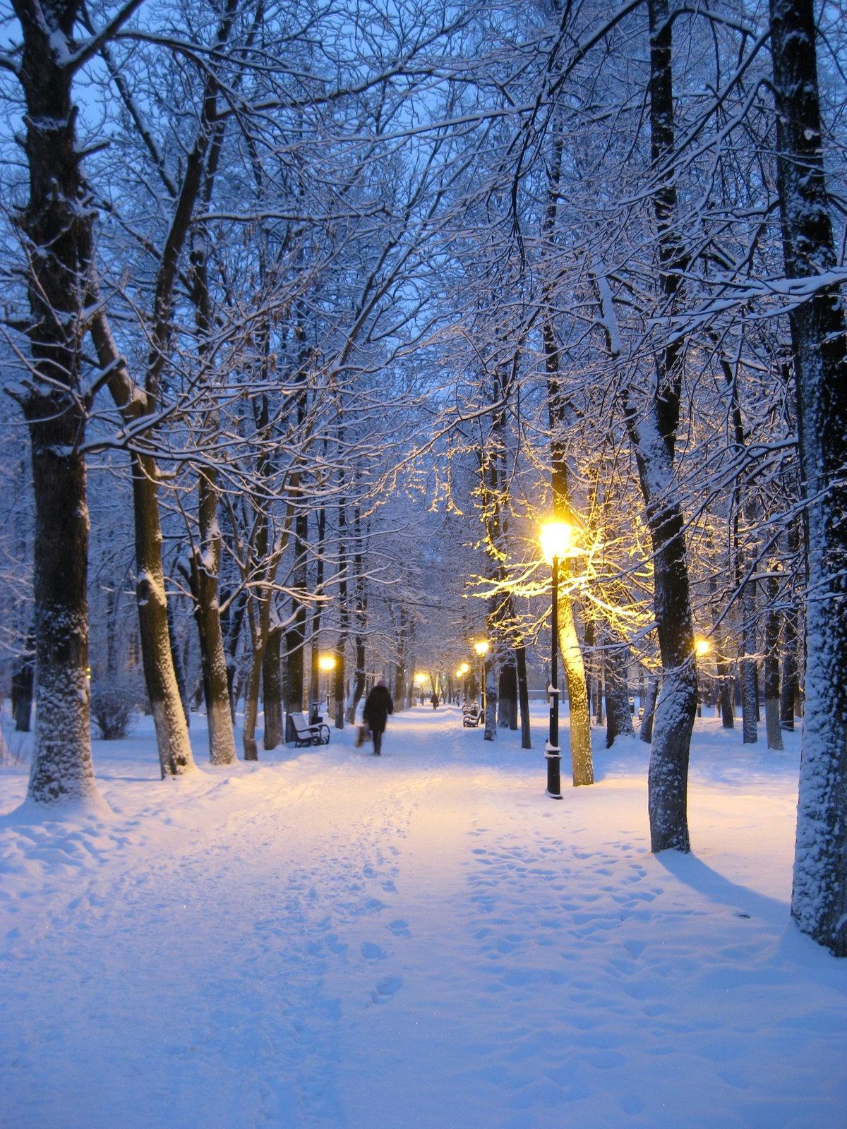 Зимний пейзаж шишкин дорога фото практически