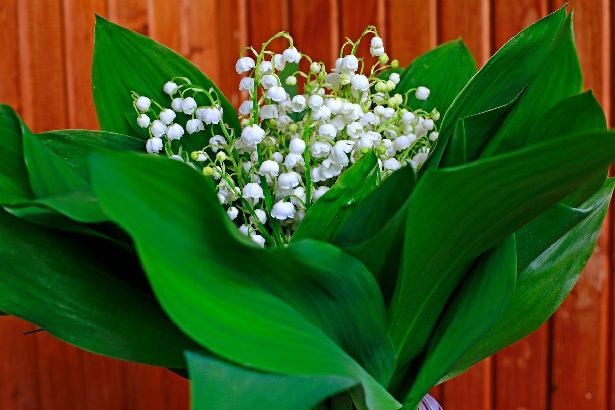 фото картинки цветы ландыши художники работали
