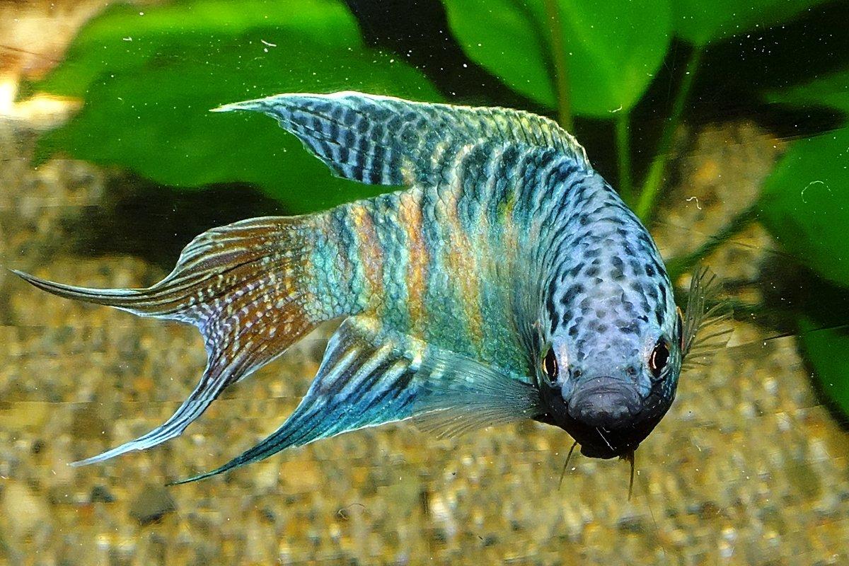 неприхотливые аквариумные рыбки фото с названиями и описанием днем