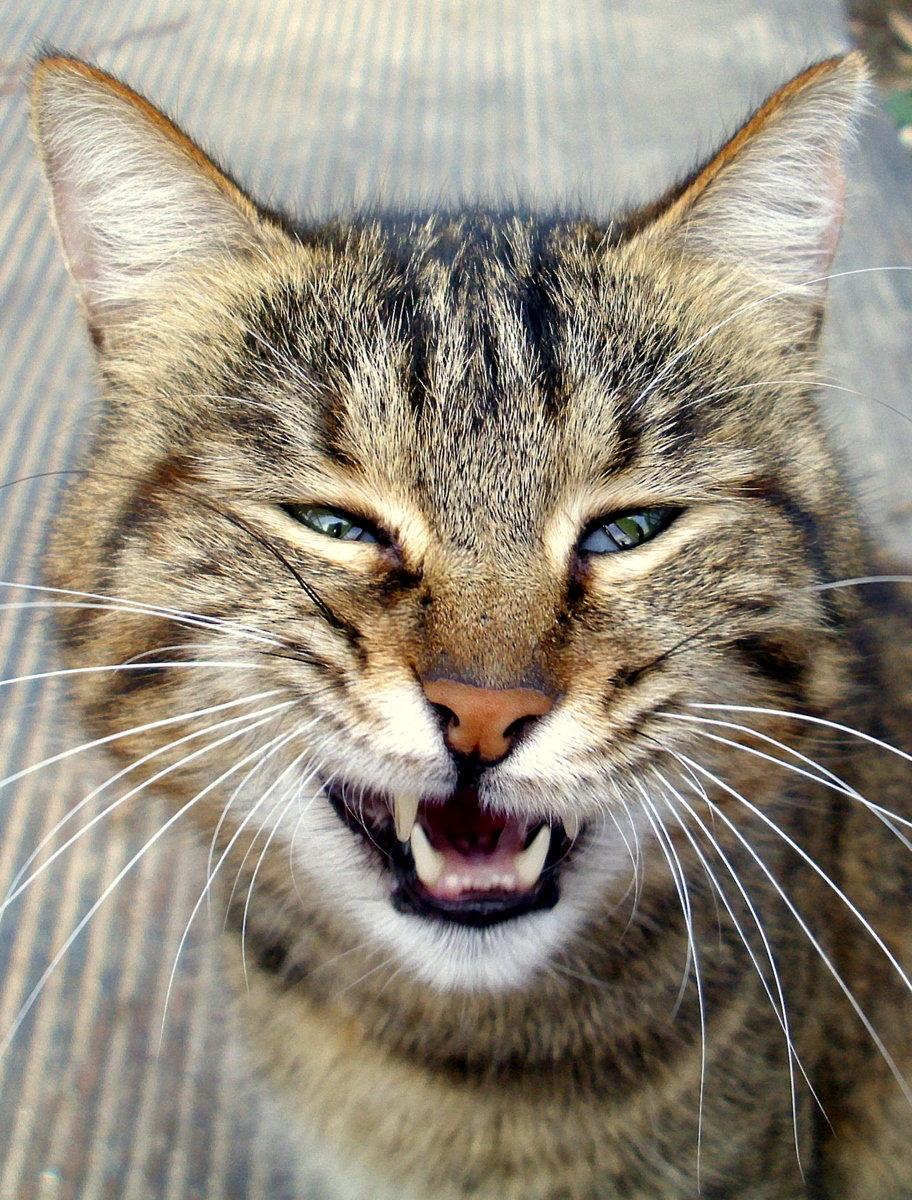 Кот довольный картинки