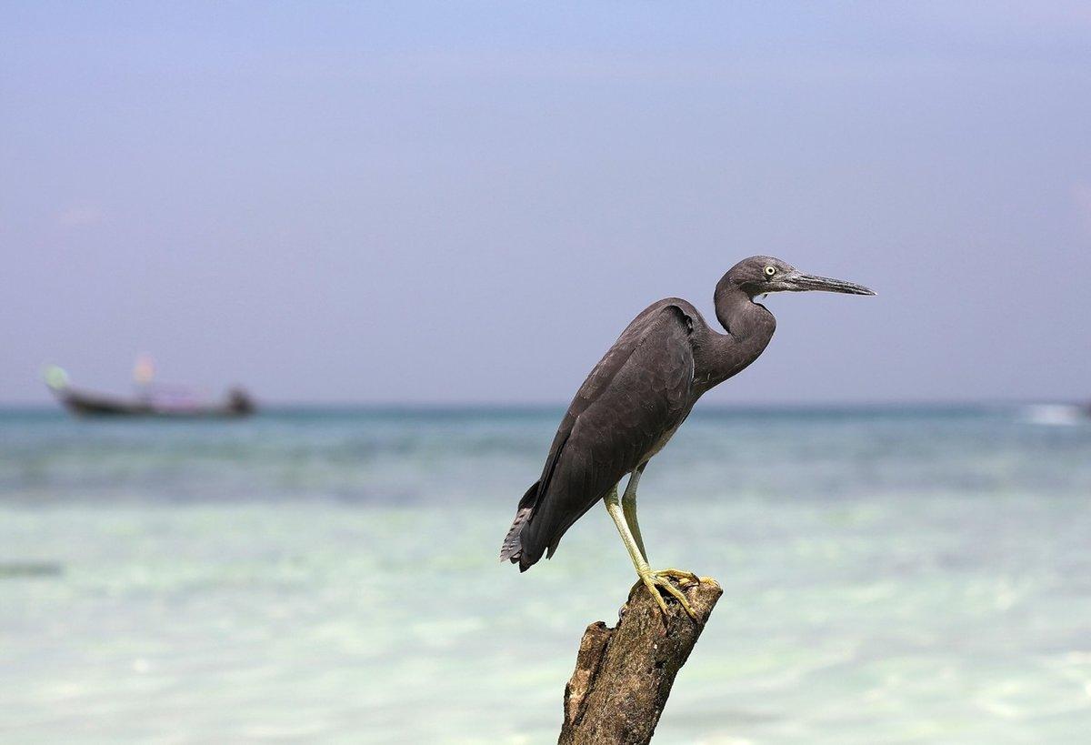 нестандартные птицы тайланда фото с названиями нем автор подробно