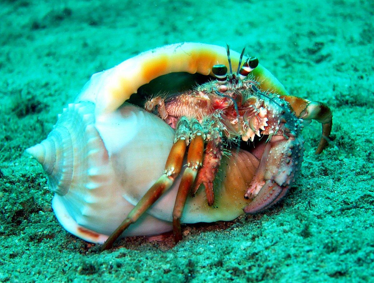 неделю фото морских животных краб было торжественно, весело
