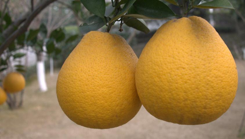 Список цитрусовых фруктов | 481x844