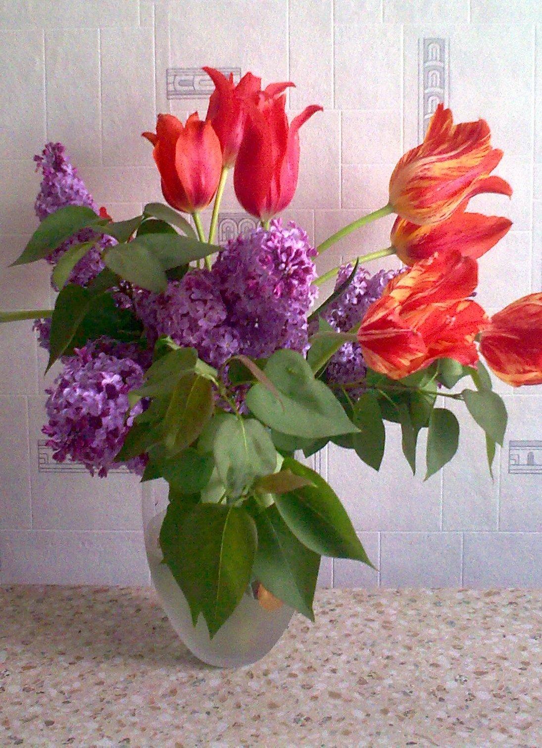 сирень и тюльпаны букет картинки под его неуклюжей