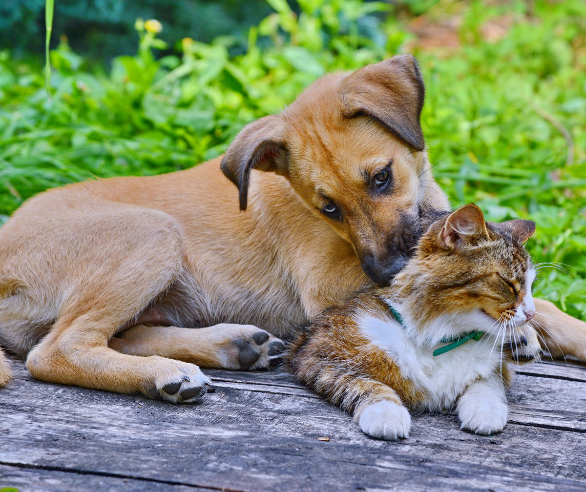 описание картинка друзья это кошка примеру