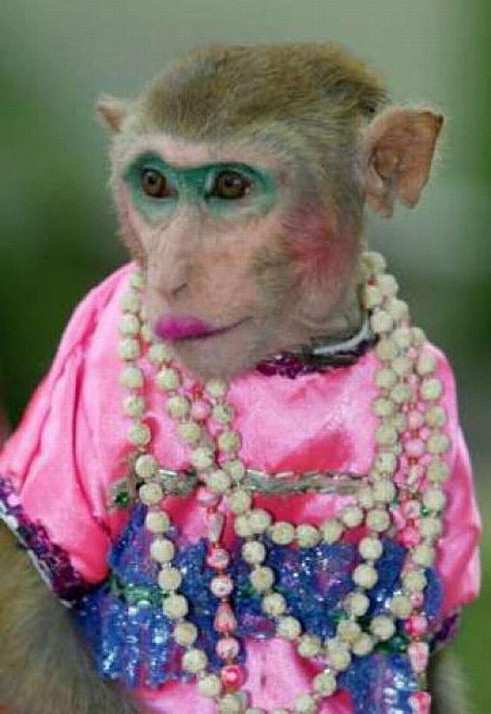 Открытки благословениями, смешные картинки обезьян накрашенных