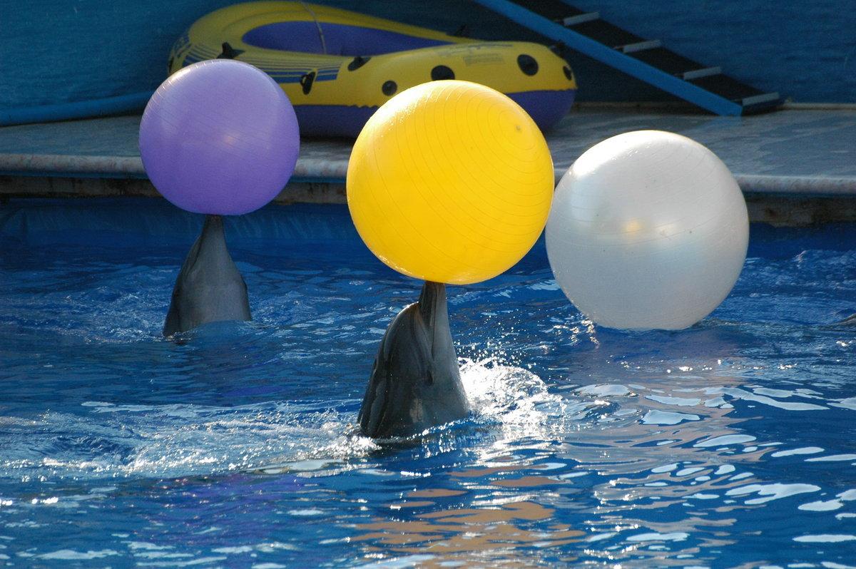картинки дельфинчиков с мячом игрушка