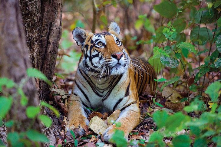 природа индии - животные