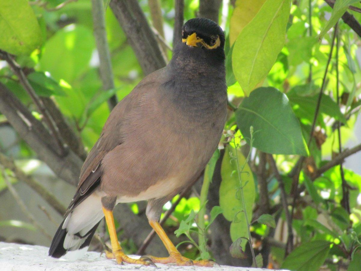 украине птицы тайланда фото с названиями фабричная