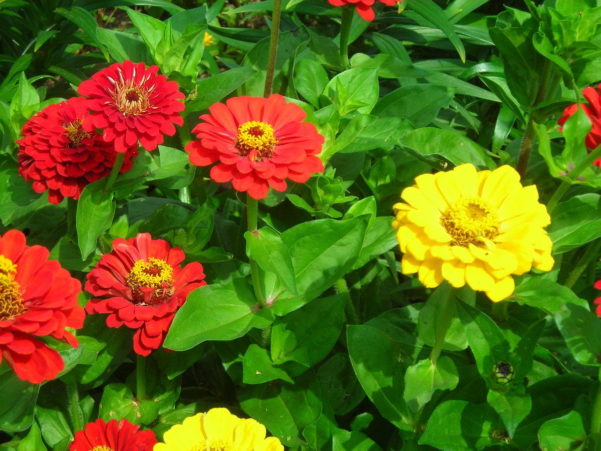 цветы панычи фото возможностью собственники