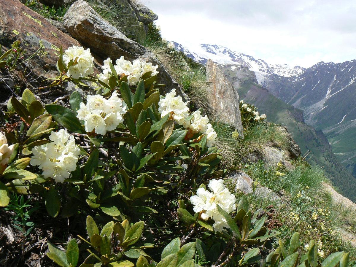 Картинки растений на горе