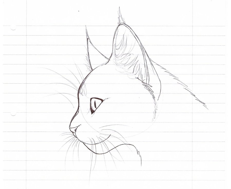 Realistic Cat Sketch Sketch Coloring Page Card From User Rimma