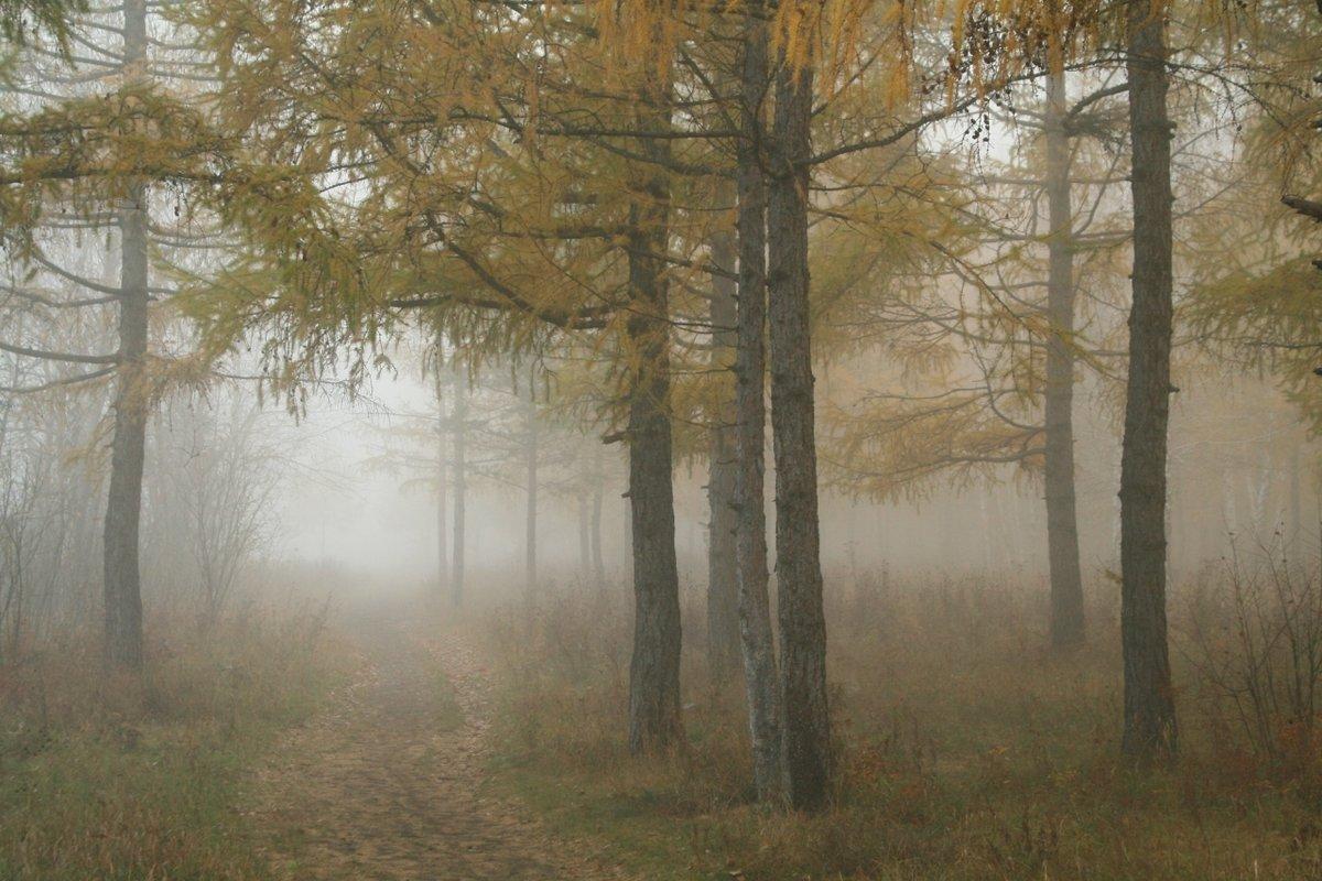 осень#листопад #осень #сентябрь #туман #утро