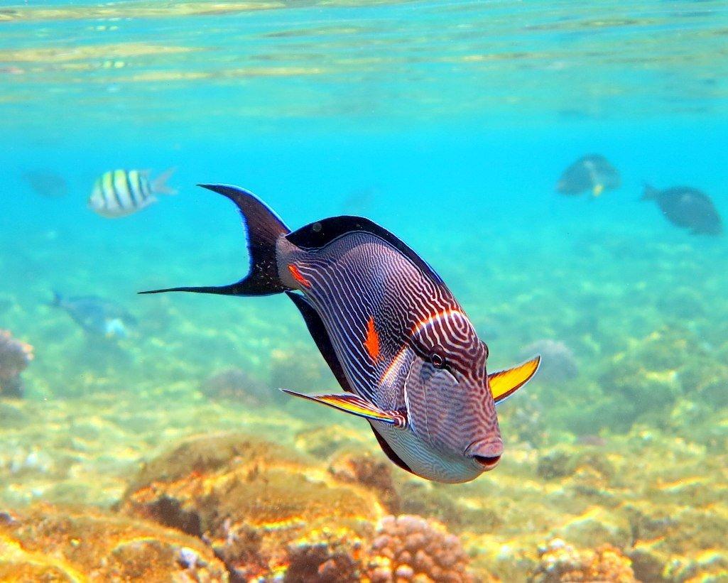 смотреть картинки рыб в море категории лошади