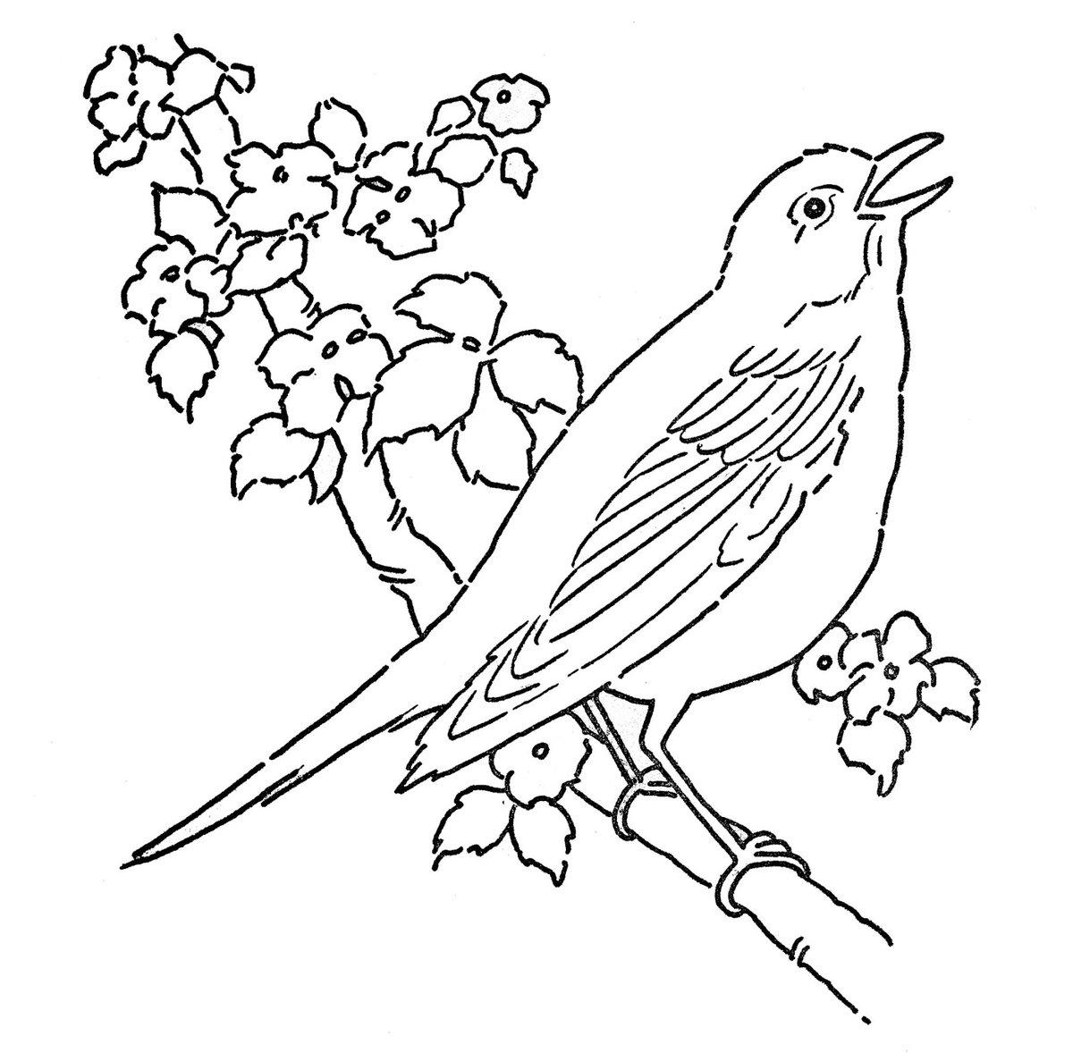 Птичка раскраска картинка