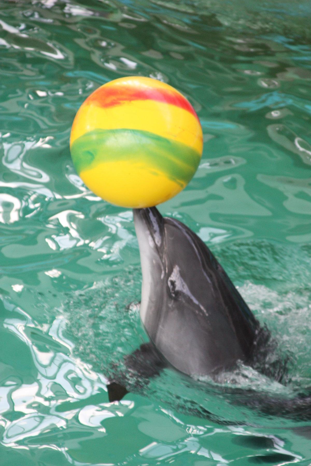 сейчас амулет картинки дельфинчиков с мячом рассказал, почему менялся