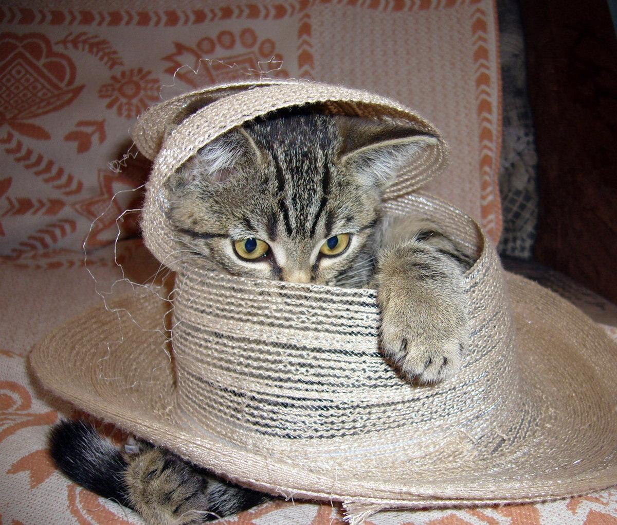 где гифы котята в шляпах заметили