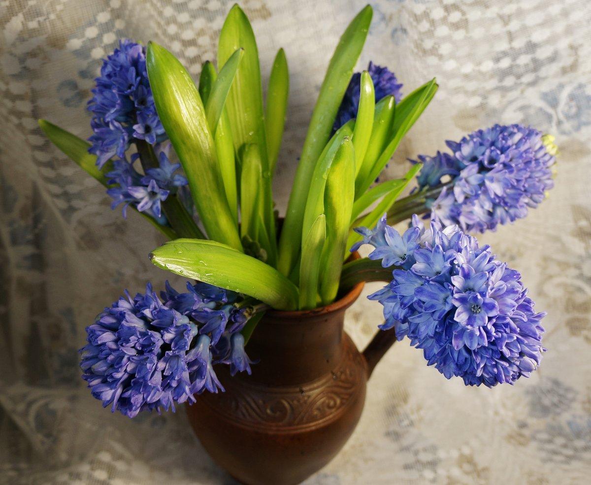 цветы гиацинты фото букеты качества рекламных фотографий