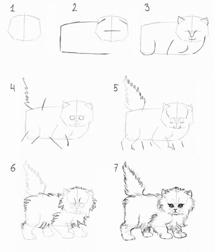 Нарисованные коты карандашом поэтапно