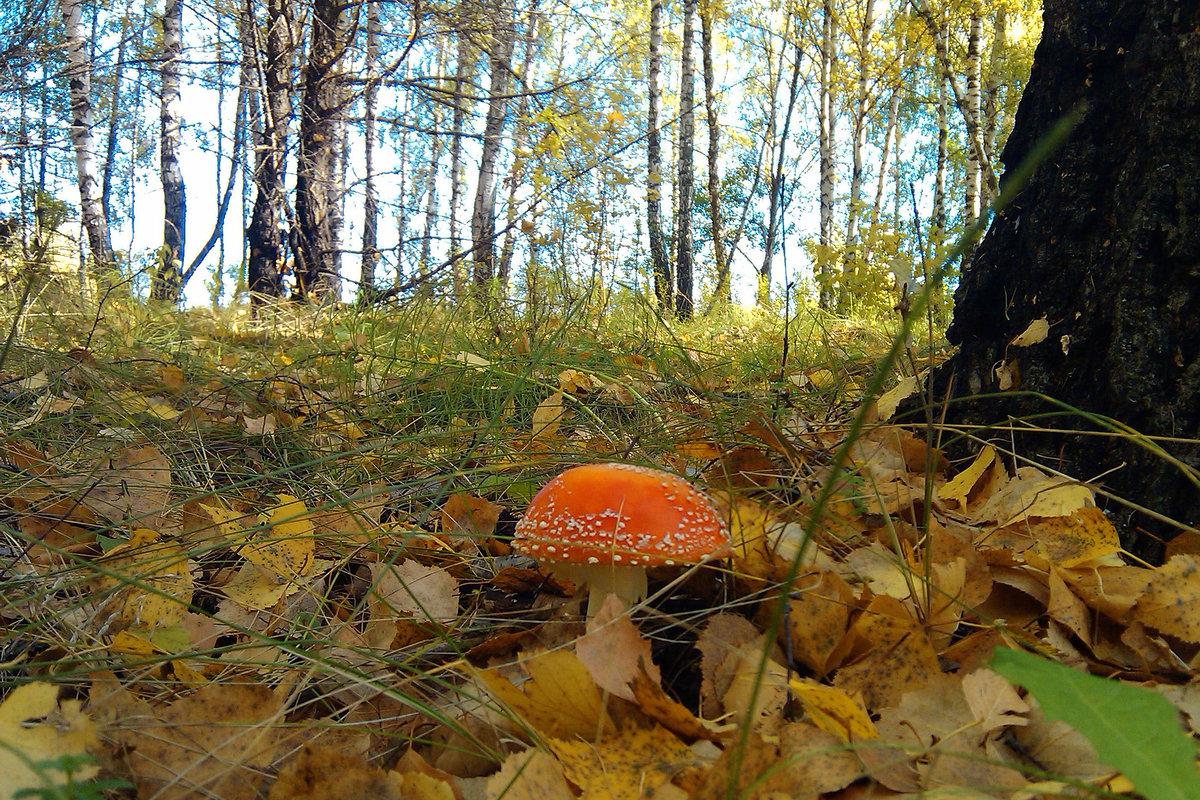 Картинки лес грибы осень сентябрь, сделать открытку лет