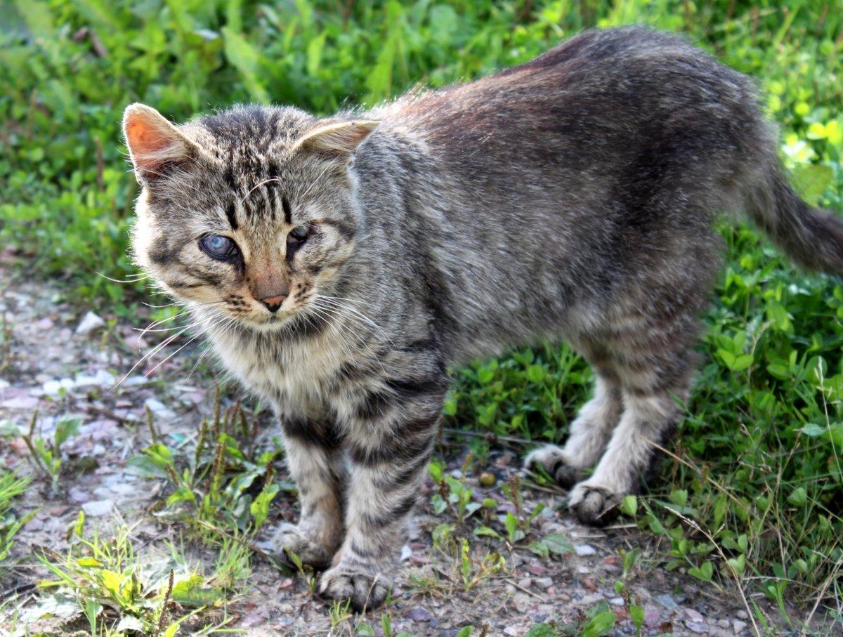 Коты дворовые картинки