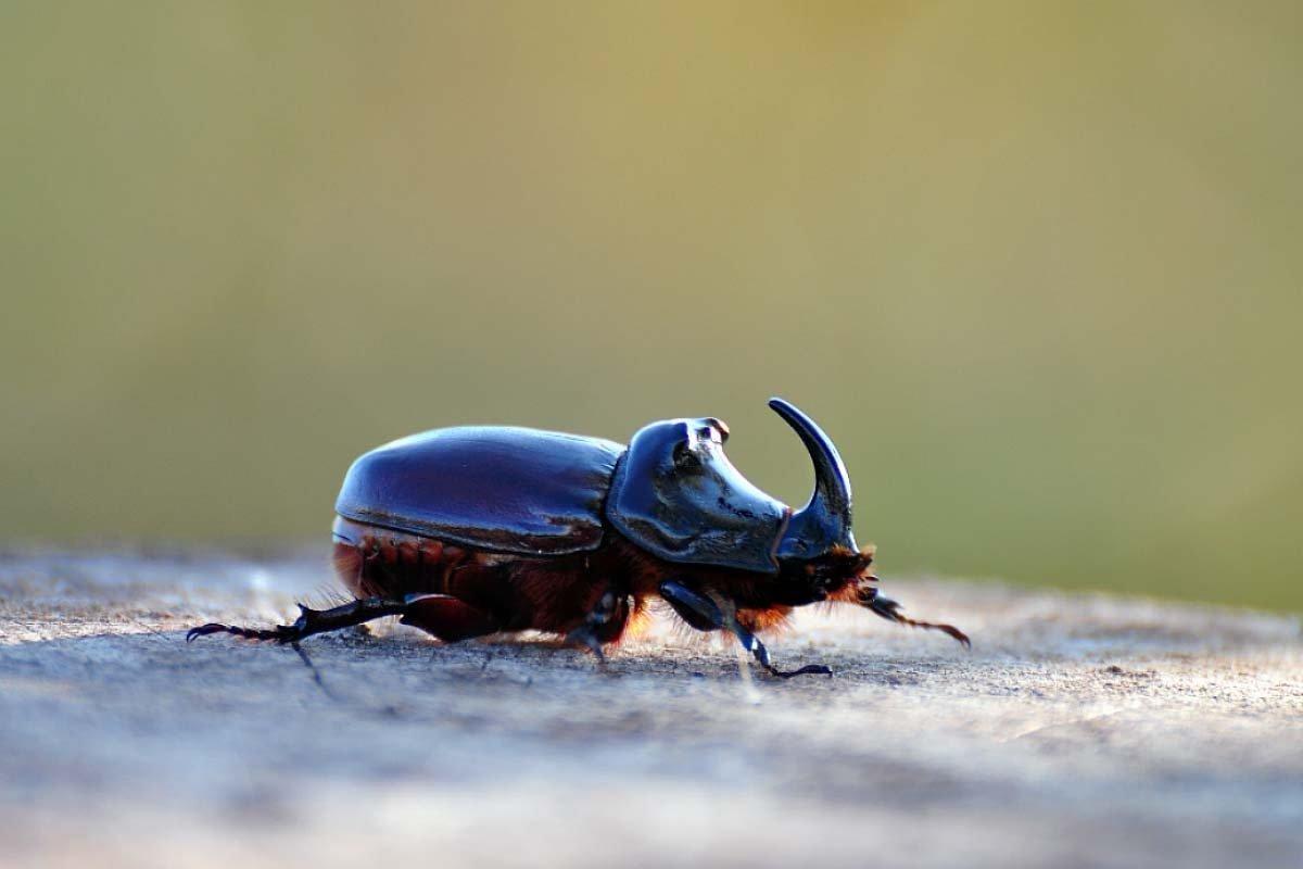 домофоне жуки картинки макросъемка растр поделиться изображениями раритетных