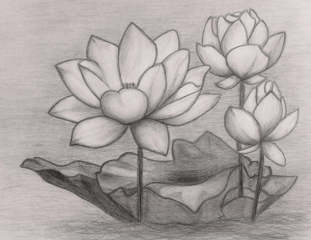 Цветок лотоса картинки рисованный