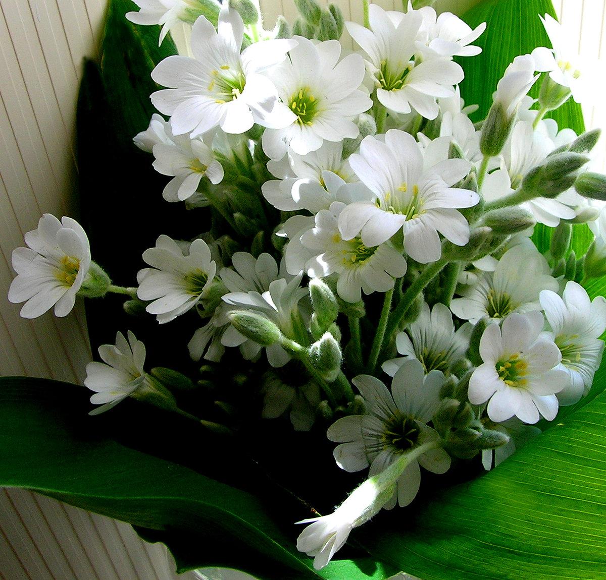 Анимационные гифки цветы липовой заявил