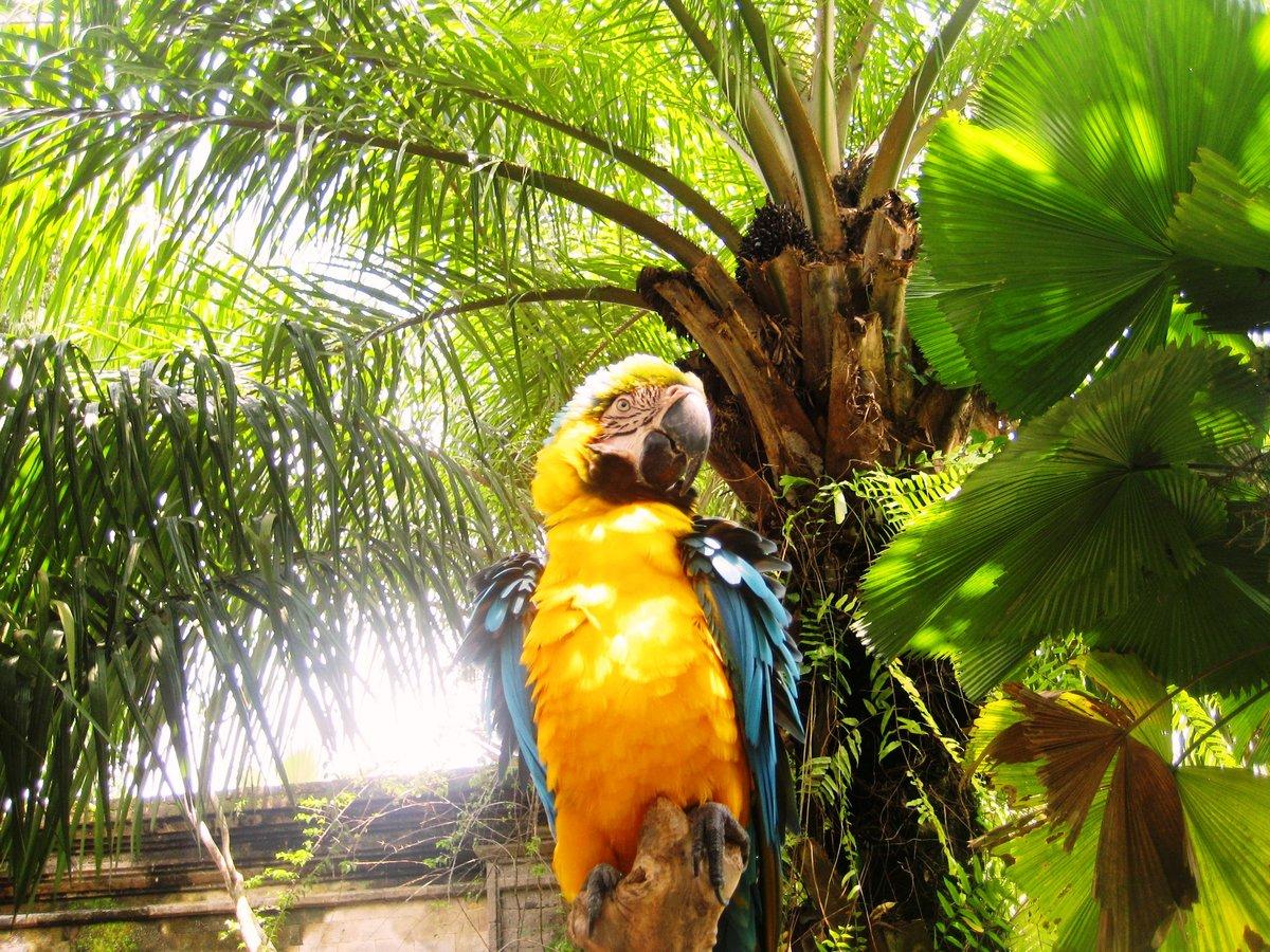 картинки попугаев джунглях адлера подробными описаниям