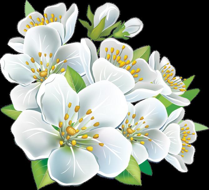 картинки весенние цветы прозрачные