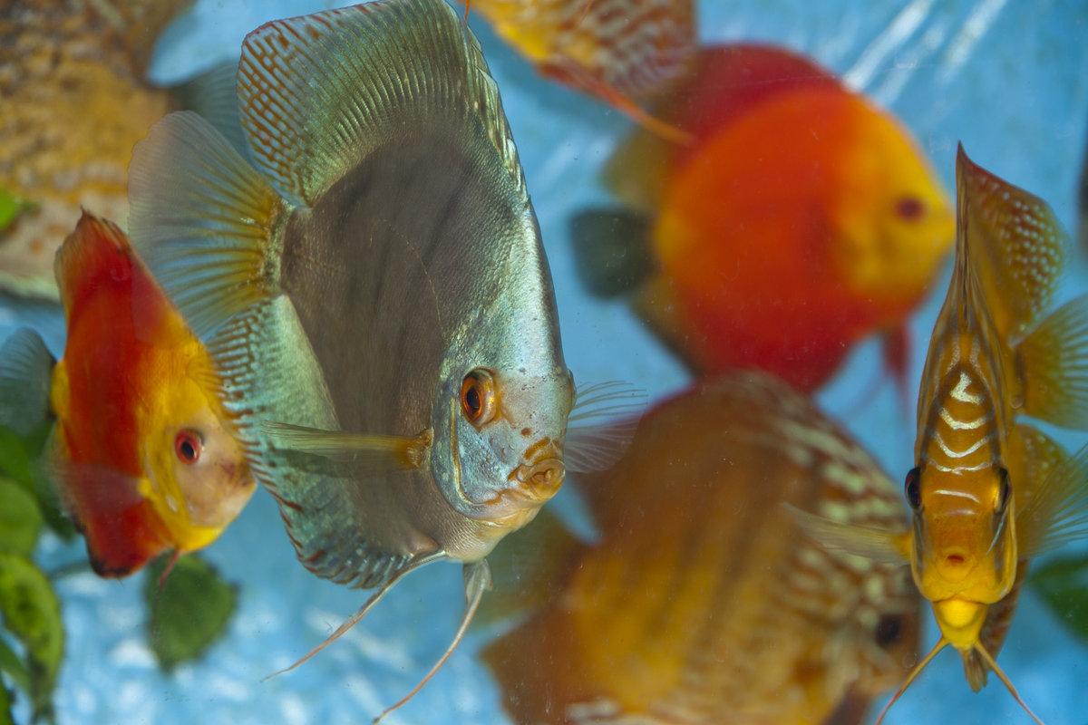 все картинки домашних рыб могут быть изготовлены