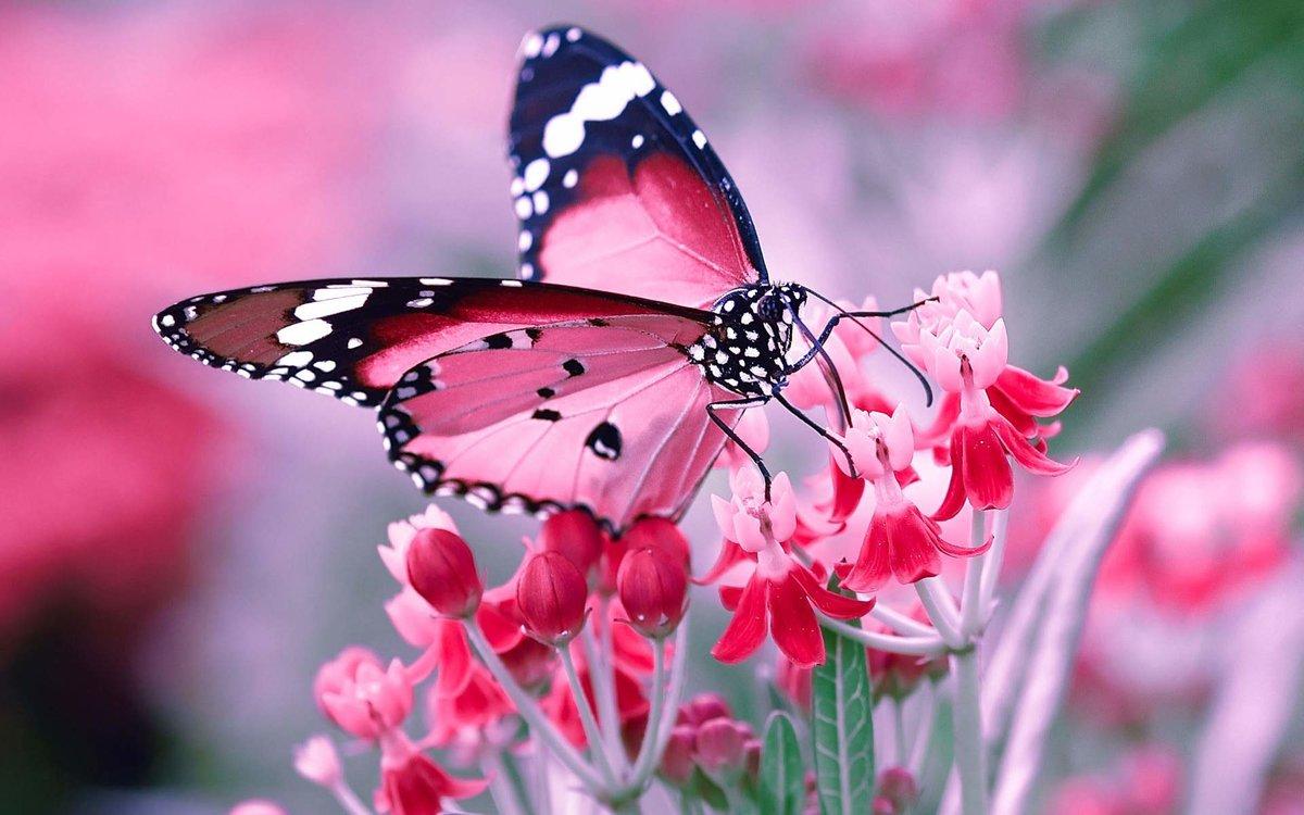 Бабочки фото красивые картинки