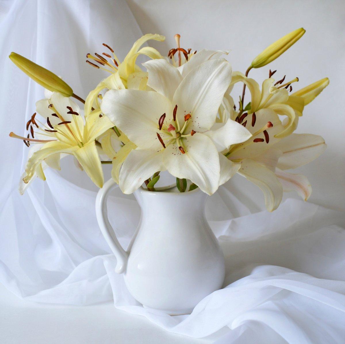 собак картинки с цветами лилии белые вид деятельности