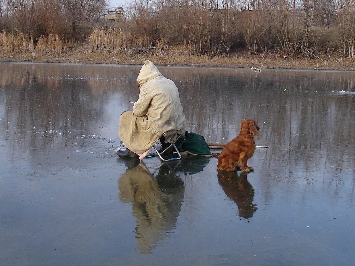 рекламы социальных картинка собака на рыбалке сковороде