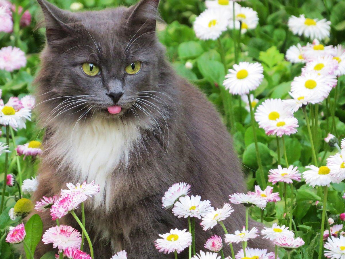 провод фото цветов с котиками нём возможно редактировать