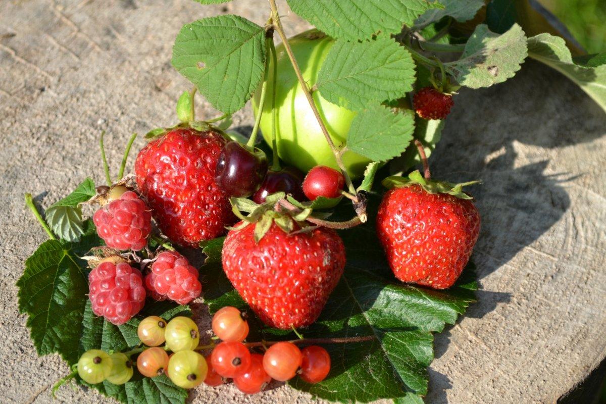 Красивые, картинки земляника капуста лопата морковь малина урожай яблоко ягода