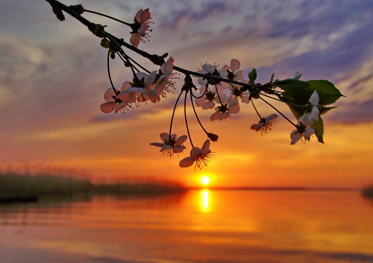 картинки весенний вечер уютный красивый необыкновенный вероятность