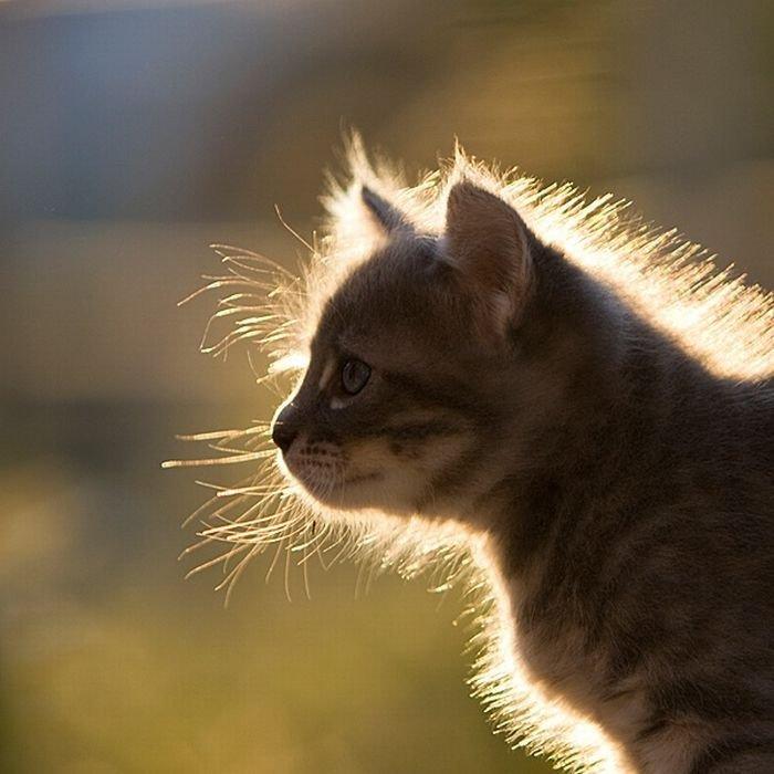 Картинка котенок смешной, днем рождения