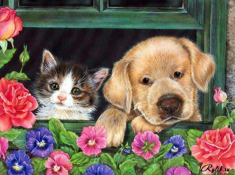 Открытки, открытки коты и собаки