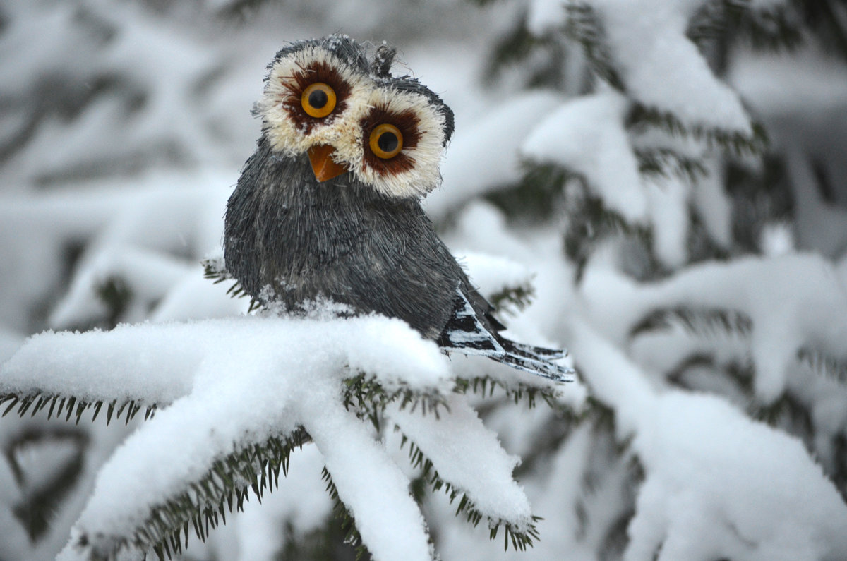 Картинки тему, прикольные картинки про зиму