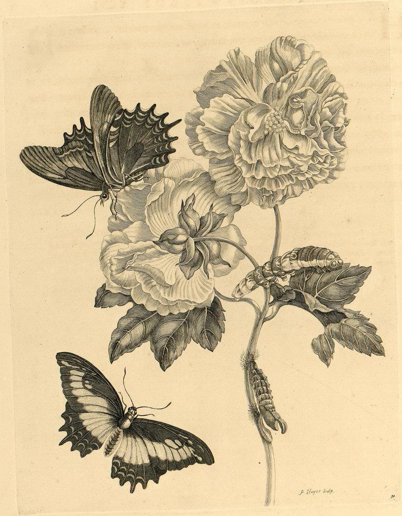 Картинки графические цветы насекомые