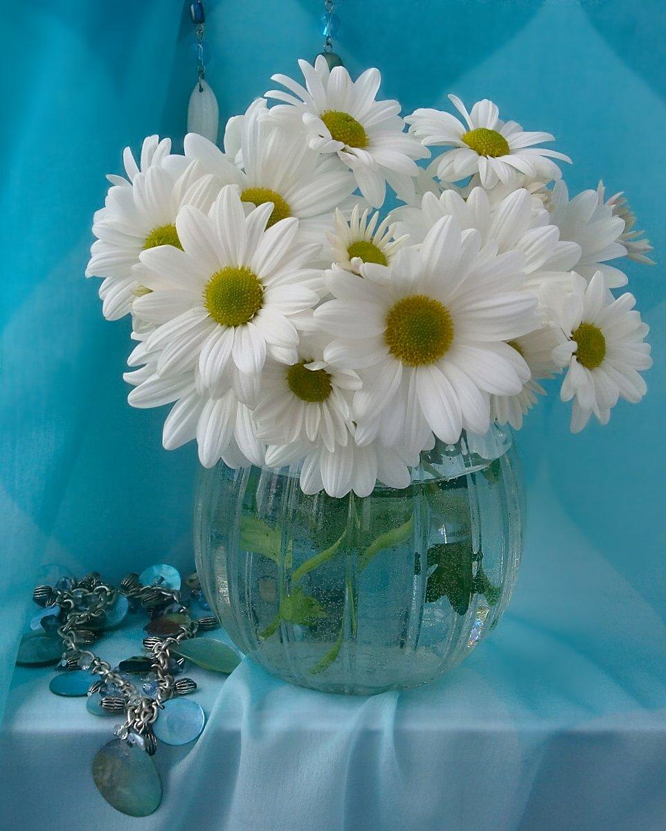 Про сплетников, фото цветы открытка ромашки
