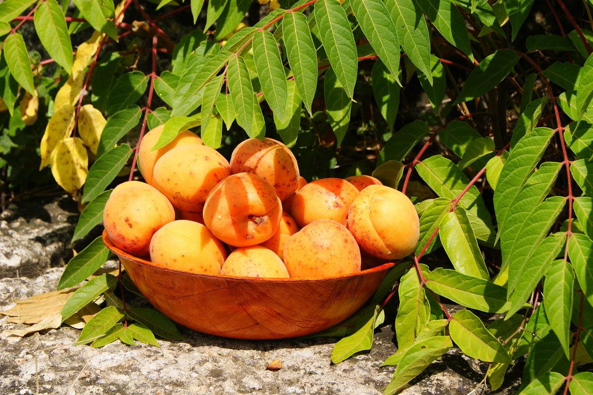фото золотого абрикоса дороге будут указатели