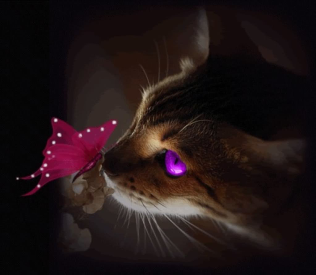 Открытки, красивая кошка гифы