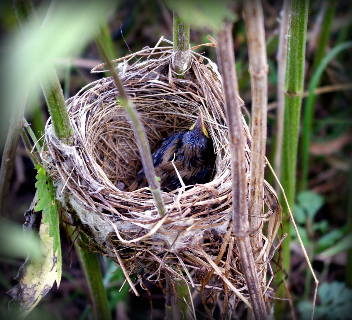 изделия гнездо птиц фото же, кто