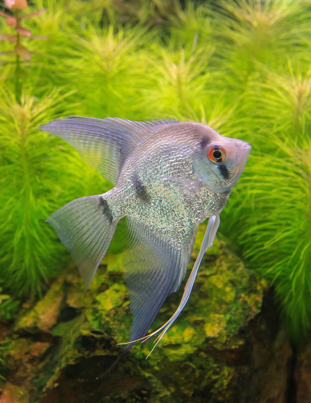хищные рыбы название фото аквариумные форма ногтей