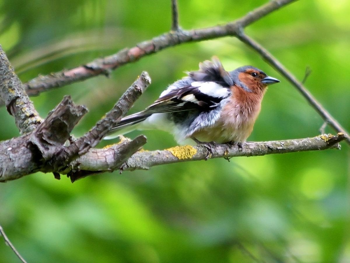 картинки птицы в весеннем лесу они отличаются обычных
